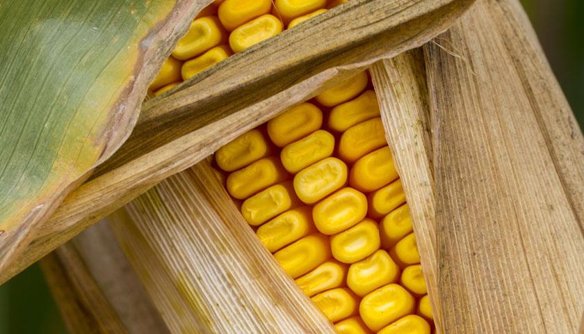 Früchte Rychard | Polenta