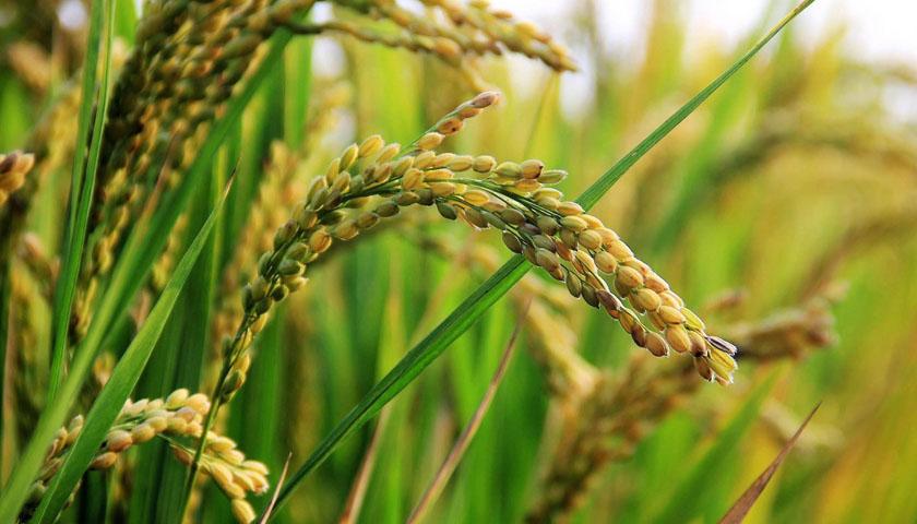 Früchte Rychard | Reis