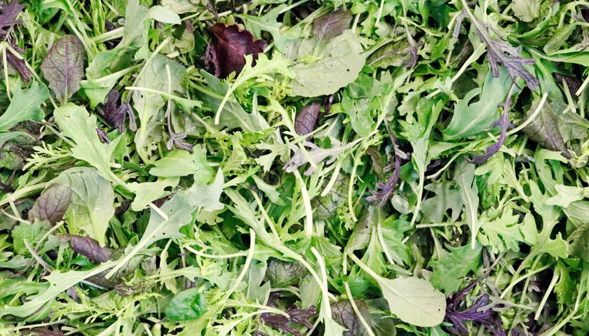 Früchte Rychard | Salate