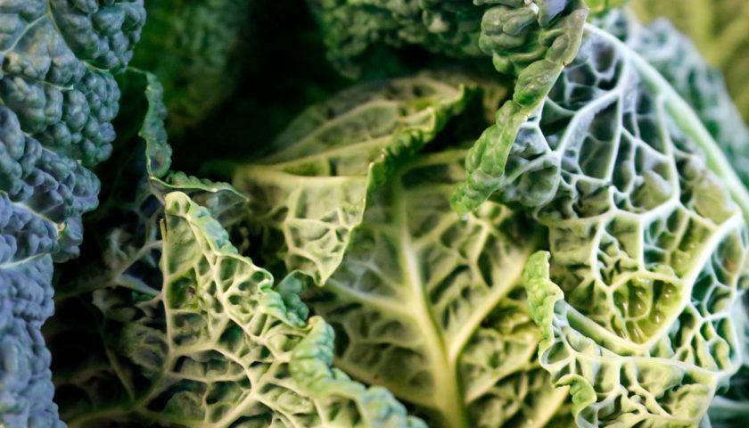 Früchte Rychard | Gemüse